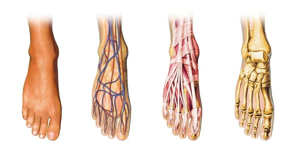 servicios ortopédicos