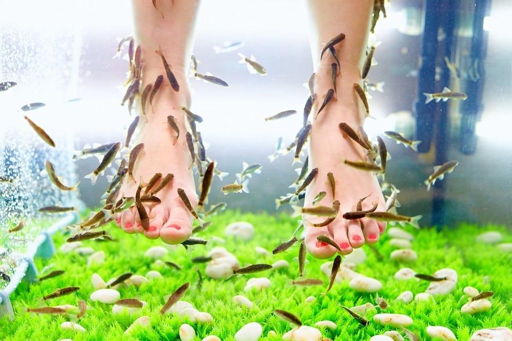 ¿Es peligrosa la terapia de pies con peces o ictioterapia?
